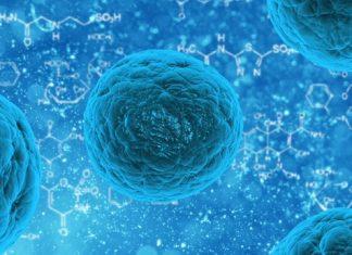 cell sorting lapaso project microfluidic longevity