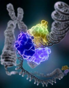 Plateforme microfluidique pour l'étude de mécanismes moléculaires impliqués dans la réparation de l'ADN humain