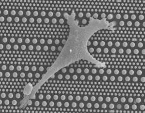 pillarcell-microfluidic-system-for-stem-cell-differentiation-300x239_pillarcell_microfluidic
