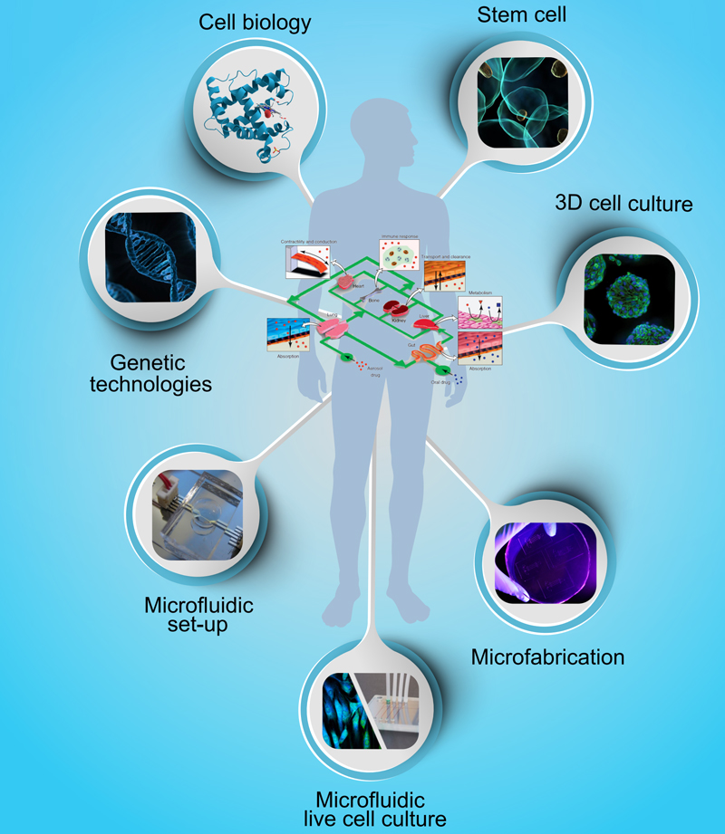 organ-on-chip-microfluidic-research-project