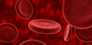 Blood plasma and longevity-Plasma received from young people may have a rejuvenating effect