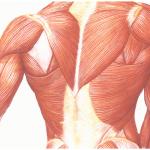 regeneration-musculaire-image-principale