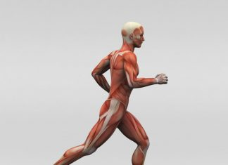 regeneration-musculaire
