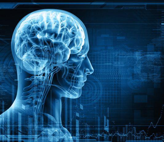 Longlonglife lutte vieillissement hypothalamus