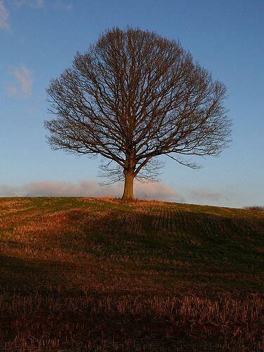 Long Long Life FIght aging transhumanisme vieillissement longévité