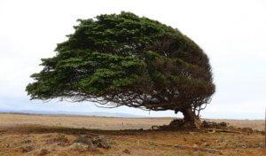 Long longe life longévité viellissement transhumanisme