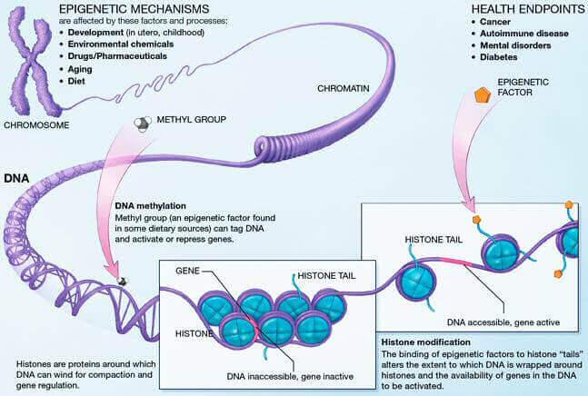 altérations épigénétiques long long life longévité anti vieillissement transhumanisme