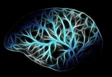 Long Long Life Vieillissement Cerveau Lysosomes