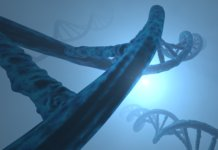 Long Long Life polymorphisme p53
