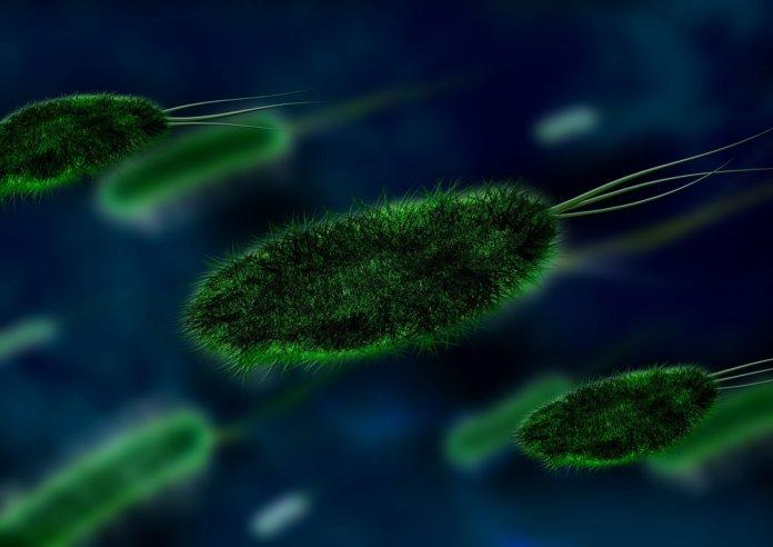 Long Long Life bactéries longévité