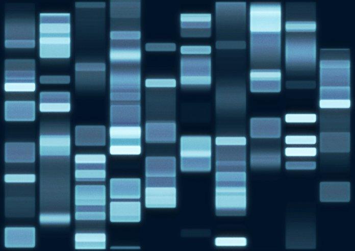 LongLongLife ADN variabilité gène longévité