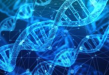 Epigenome-editing-technologie-pour-la-longévité-ADN