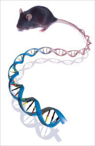 Long Long Life mitochondria new mouse model aging DNA