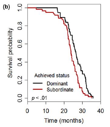 Courbe survie dominantes subordonnées Long Long Life stress vieillissement santé longévité