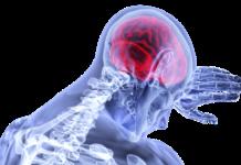Principale Long Long Life Parkinson immunothérapie TLR2 vieillissement santé longévité
