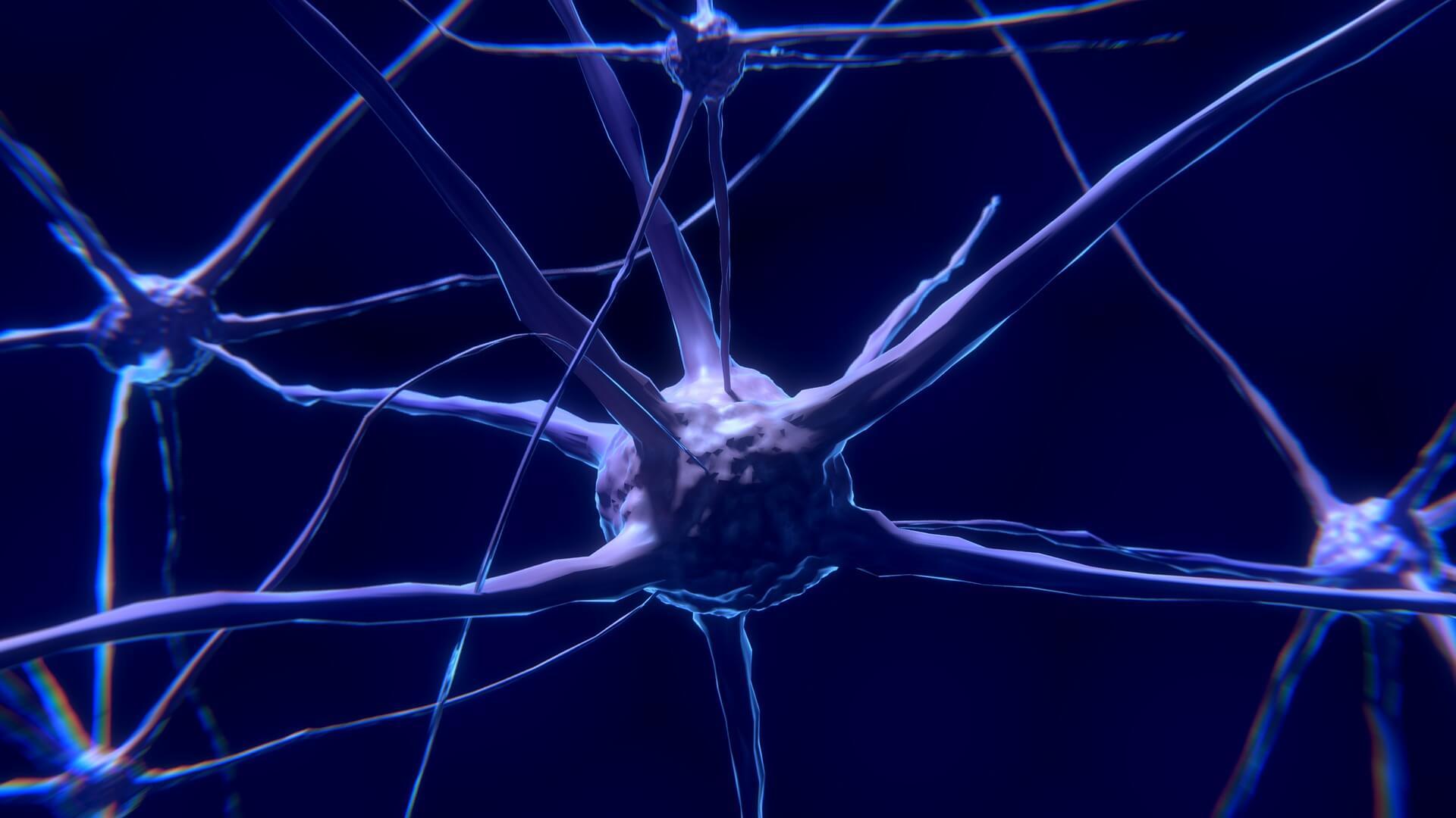 neurone Long Long Life Parkinson immunothérapie TLR2 vieillissement santé longévité