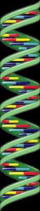 mirnas non coding dna long long life longevity transhumanism anti aging epigenetics