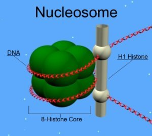 nucleosome Epigenetic_mechanisms long long life longevity health transhumanism anti aging singularity