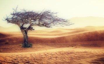Transhumanism Archives - Work for human longevity