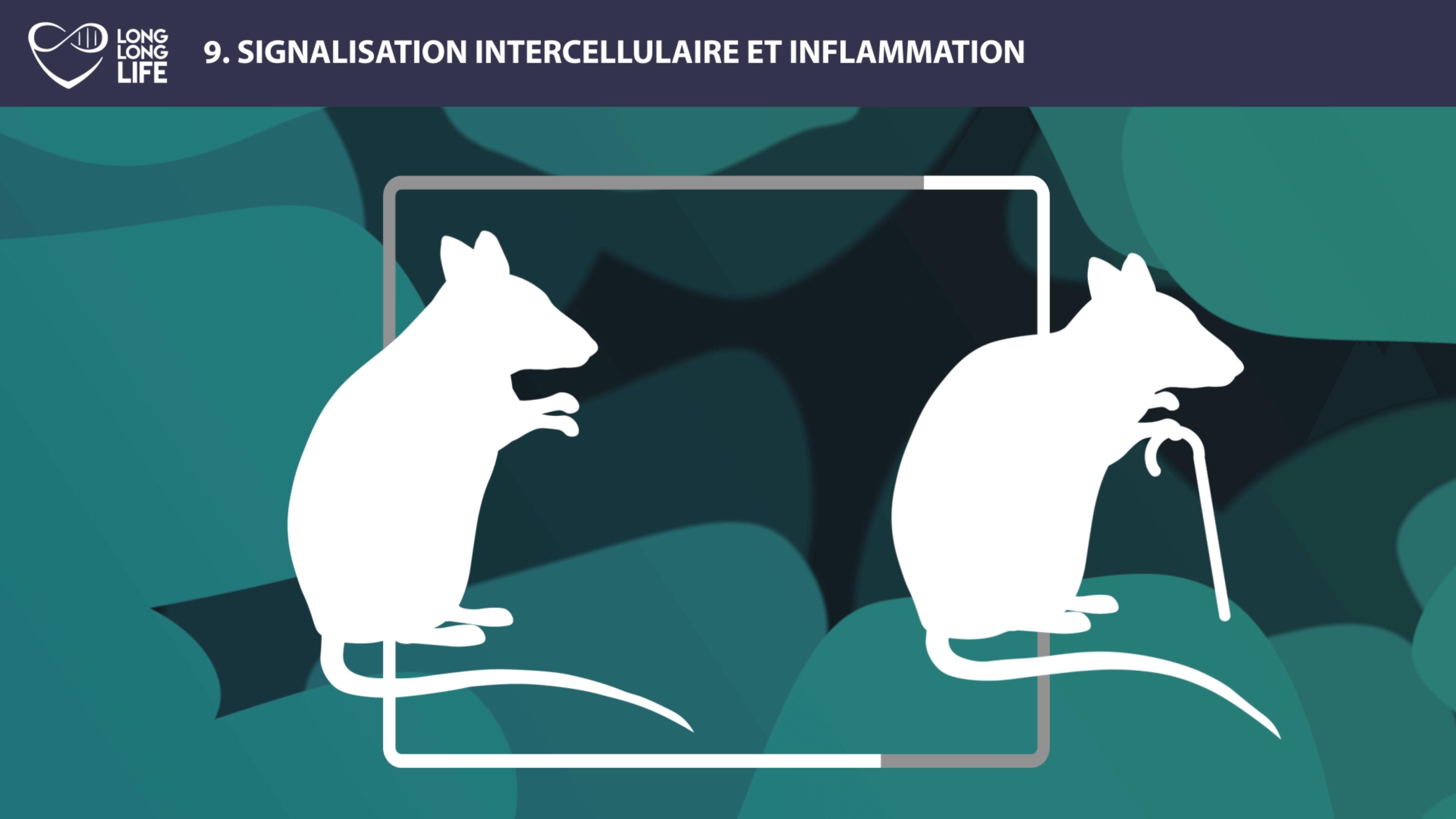 Inflammation Long Long Life longévité vieillissement transhumisme parabiose
