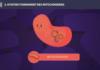 mitochondries long long life longévité transhumanisme vieillissement