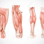 regeneration-musculaire-featured-image