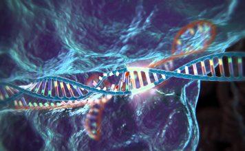 CRISPR-Cas9 vieillissement