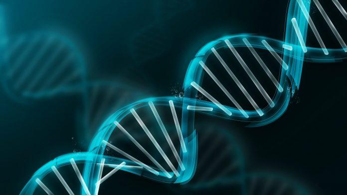 Piwi-piRNA_immortality long long life longevity aging