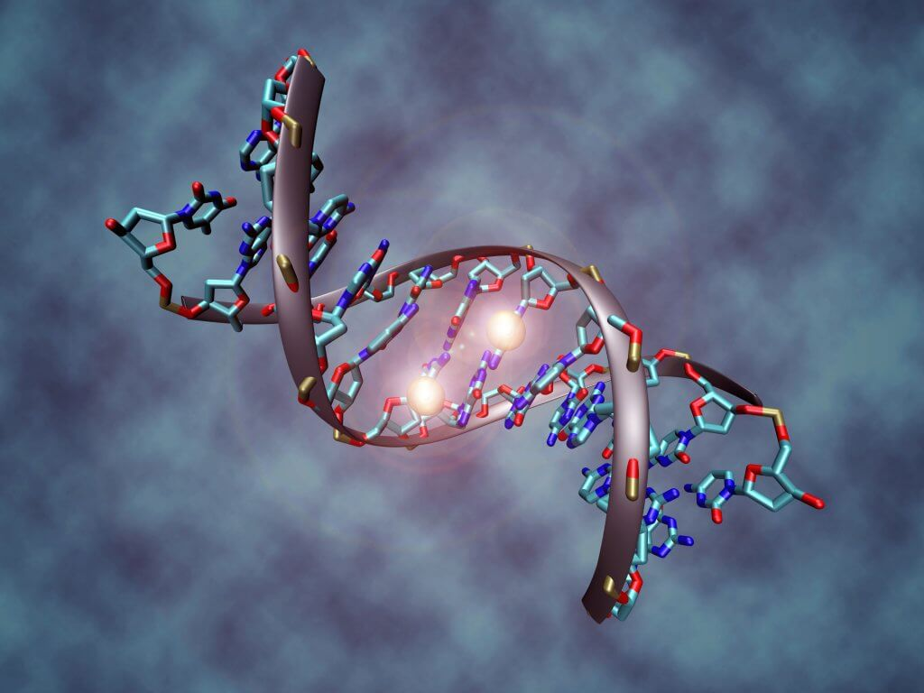DNA-Methylation-long-long-life