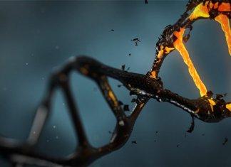 DNA-methylation-long-long-life