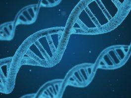 Long Long Life altérations épigénétiques causes vieillissement