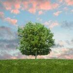 Long Long Life fight aging transhumanisme et vieillissement