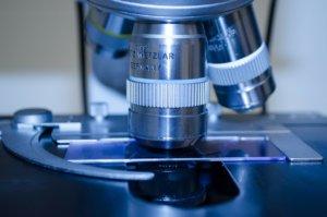 Long Long Life Spermidine lutte vieillissement neurones