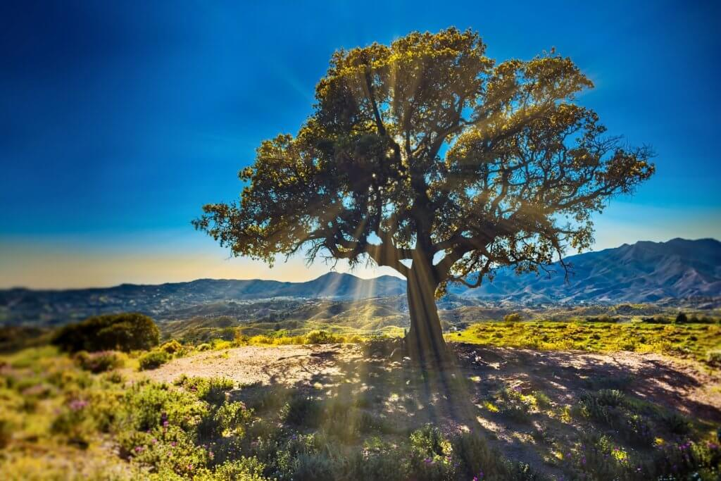 Long Long Life fight aging transhumanisme et vieillissement