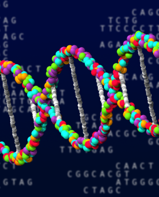 Long Long Life MicroARN LncARN épigénétique