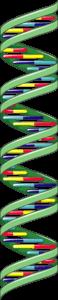epigenetique arn non codants lncarn longevité long long life transhumanisme anti vieillissement