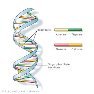 Long Long Life horloge épigénétique vieillissement ADN