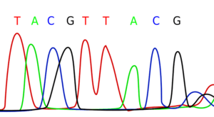 understanding-genomics-anti-aging-research-long-long-life-longevity-transhumanism