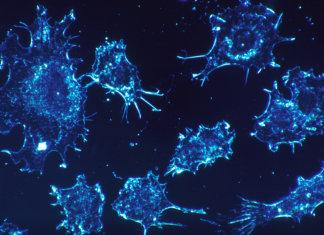Cancer_cells Long Long Life cancer vieillissement santé longévité