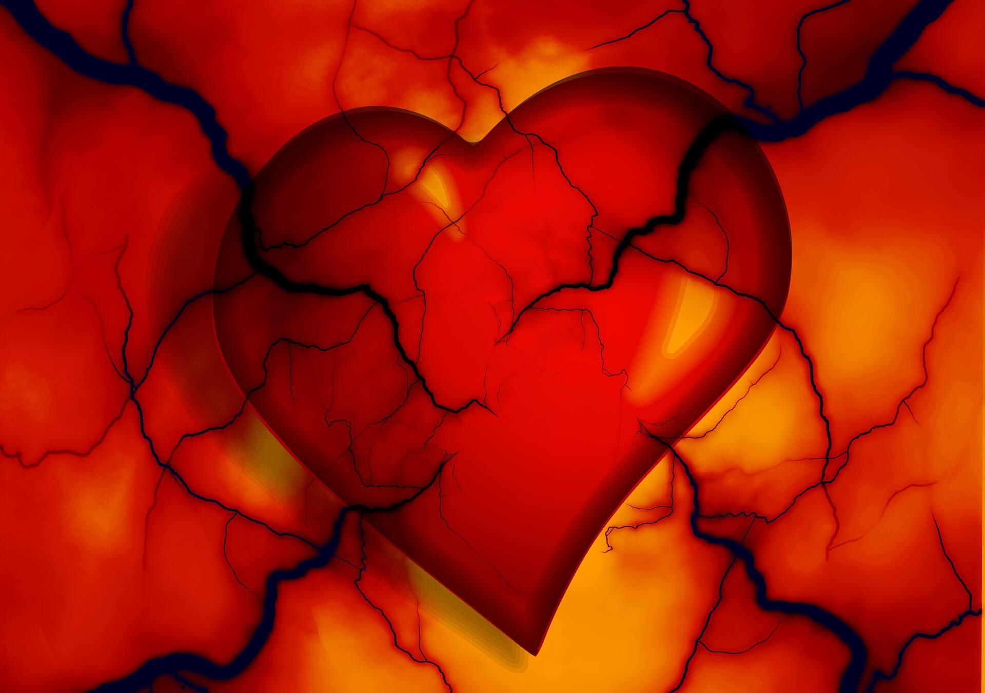 coeur 1 Long Long Life cardiovasculaires vieillissement santé longévité