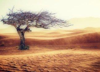 ClimateChange long long life sit transhumanisme longévité vieillissement