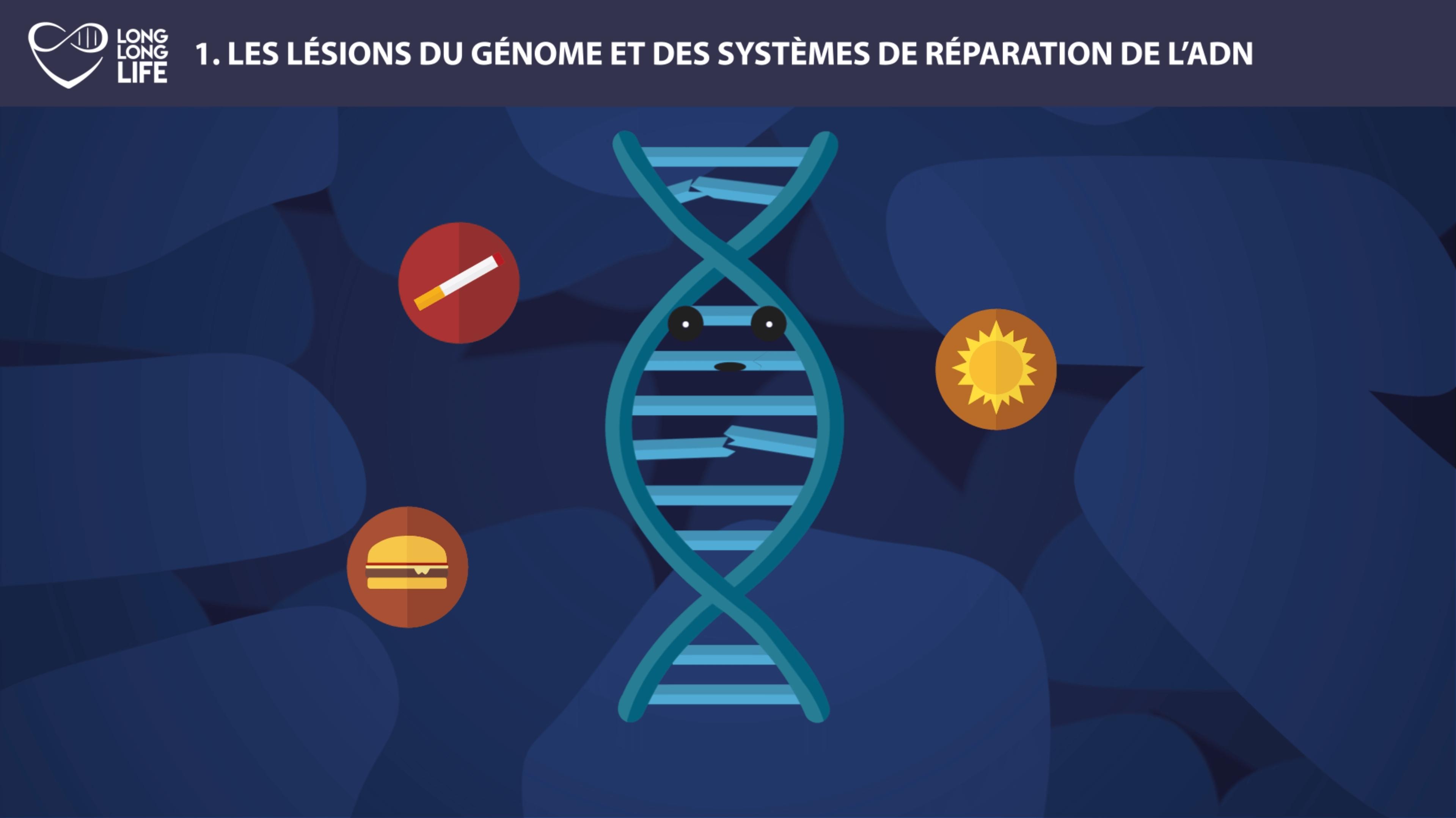 ADN 9 causes du viellissement long long life ADN causes externes longévité transhumanisme