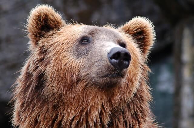 jeune long long life ours anti vieillissement longévité transhumanisme 4