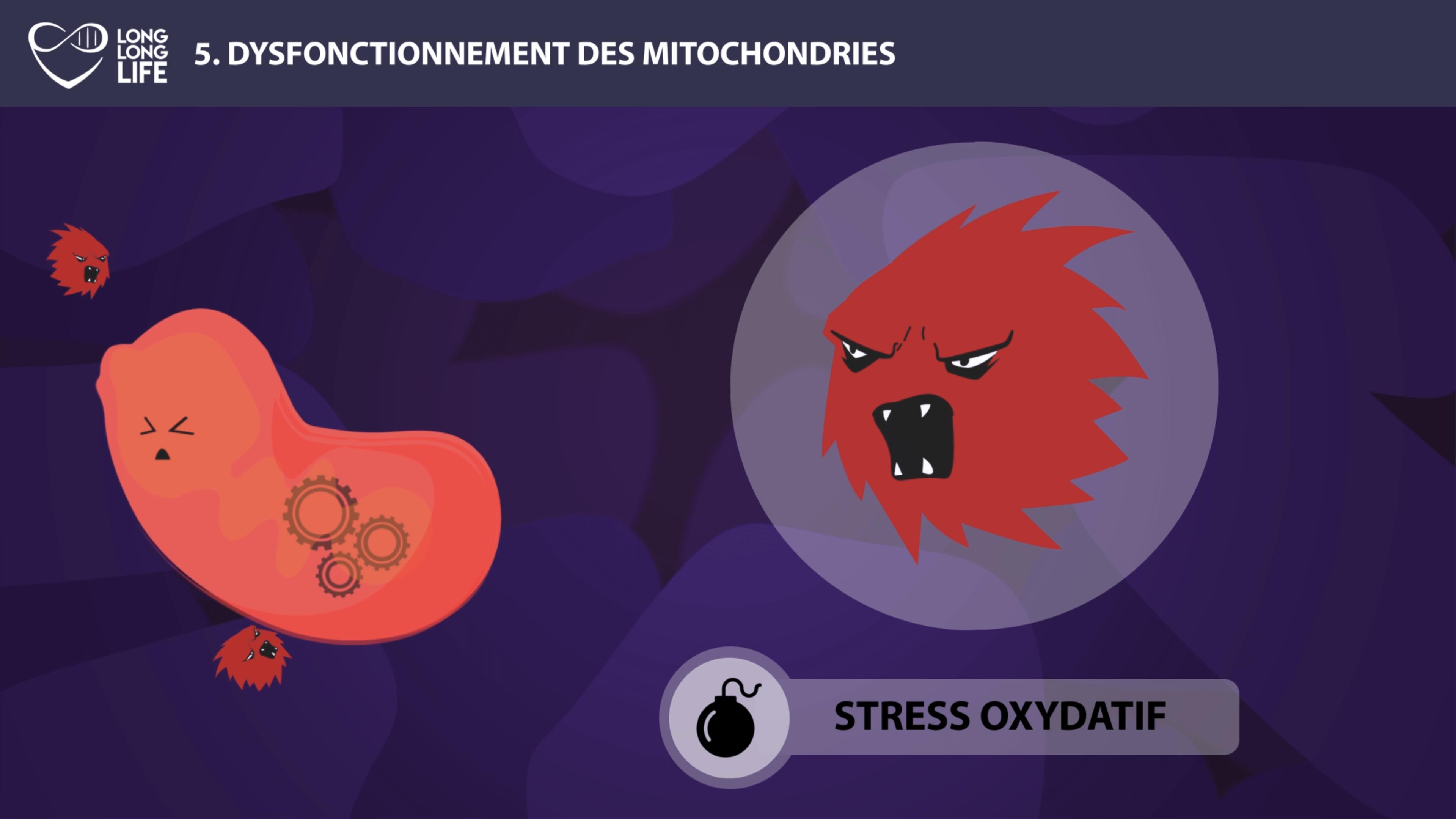 mitochondries long long life longévité transhumanisme vieillissement stress oxydatif