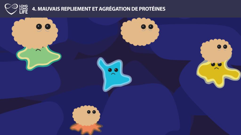 protéines vieilles long long life 9 causes du vieillissement longévité transhumanisme