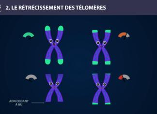 Télomère - Long Long Life 9 causes du vieillissement longévité transhumanisme