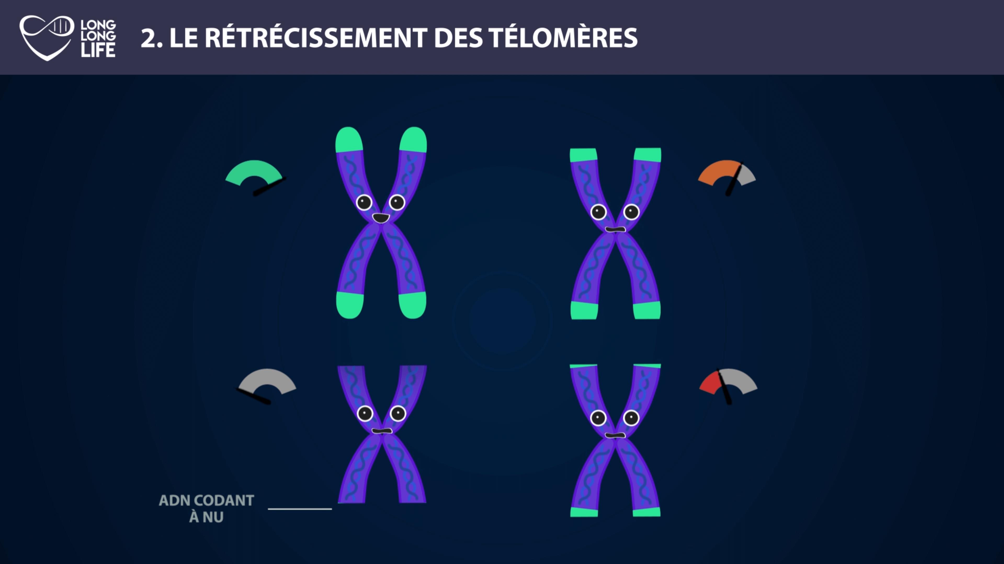 Télomère-Long-Long-Life-9-hallmarks of agign longevity transhumanism