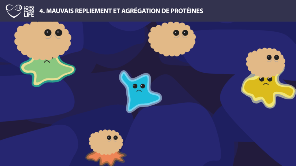 protein old long long life 9 hallmarks of aging longevity transhumanism